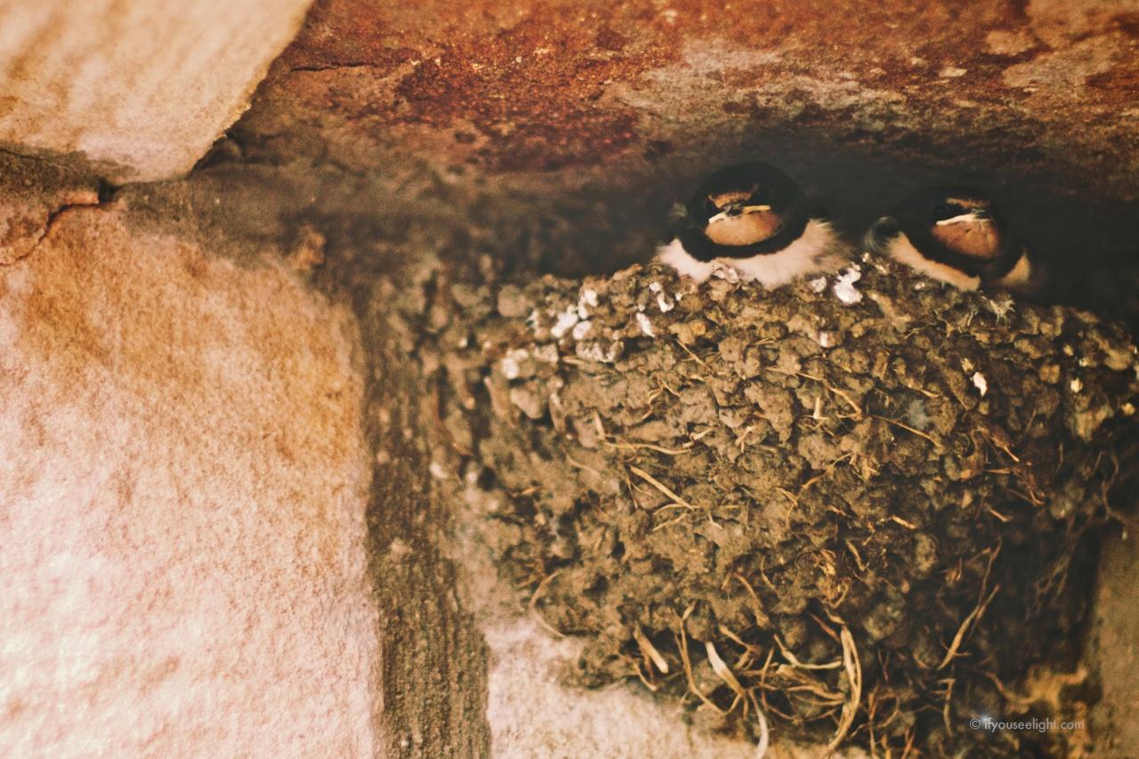 Bird nest bound