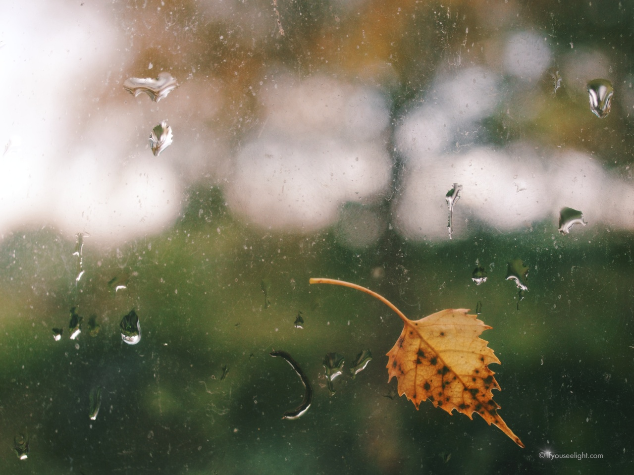 Excerpts from autumn