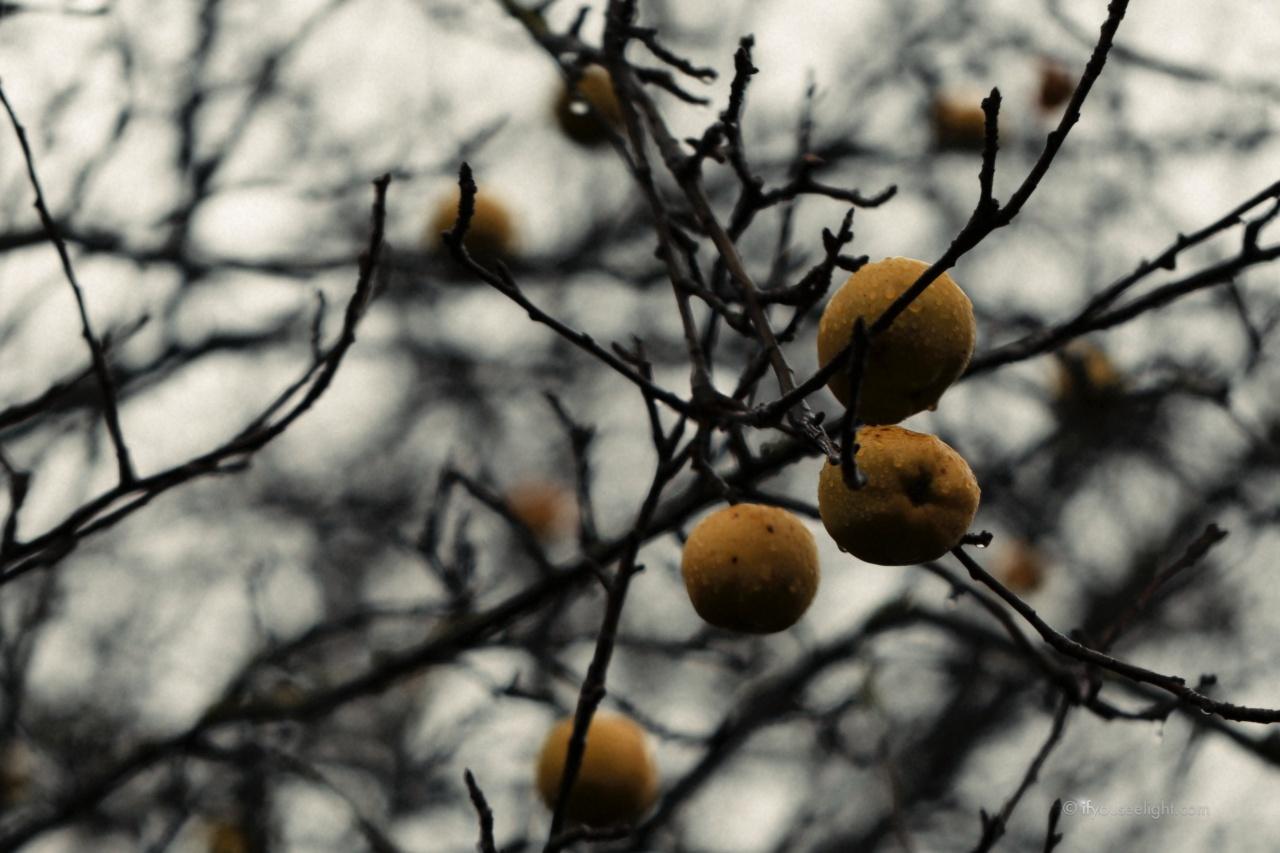 Wind in blacktrees