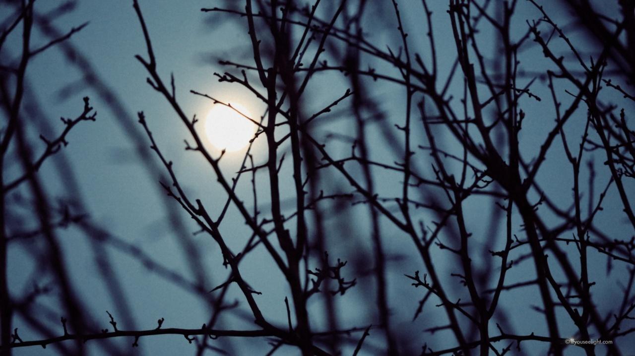 The moon hangs